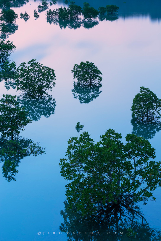 マングローブ Mangrove