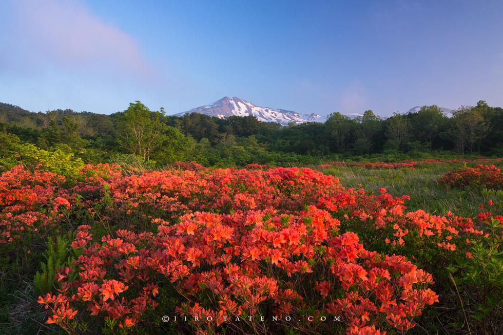 桑の木台湿原 Mount Chokai