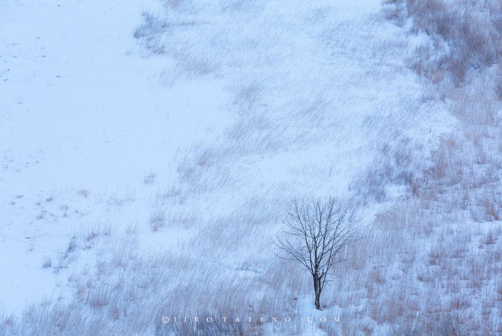釧路湿原 Kushiro Marshland