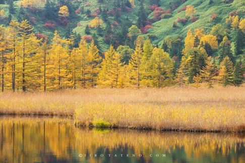 芳ヶ平湿原 Yoshigadaira
