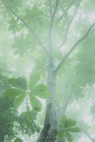 霧の森 Misty forest