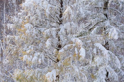 美瑛の森 Biei Forest