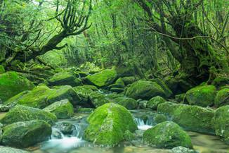 屋久島 Yakushima