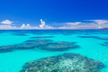 サンゴ礁 Coral reef