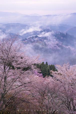 吉野山 Mount Yoshino