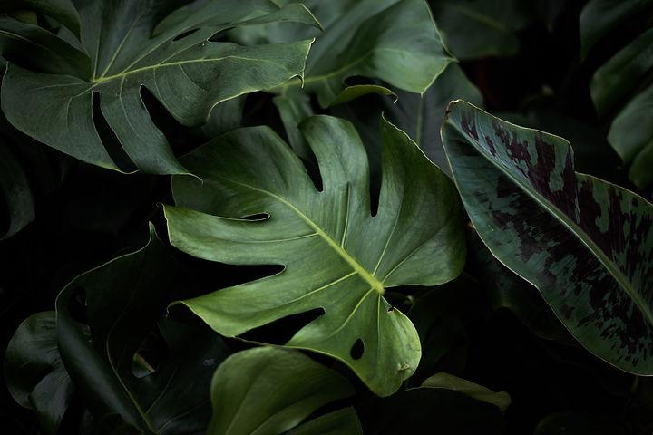 Photo de plante à feuilles larges