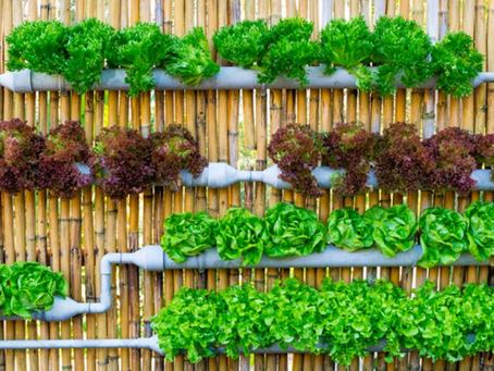 Horta vertical: uma idéia simples e saudável!