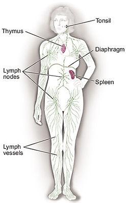 Lymphoma_Lymph_Node_Diagram.jpg