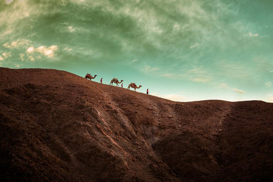 Camel farm - Eilat