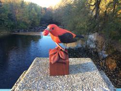 Scarlet Tanager (sold)