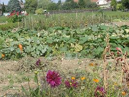 jardins communaux.JPG