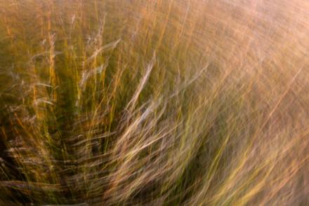 grass abstract 1995 EM.jpg