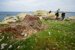 Seabird_Recovery_Project_Conservation-53