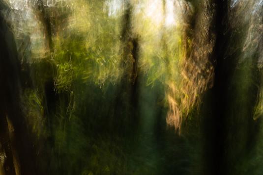 Omaha Forest  6339 EM.jpg