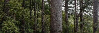 Kauri Forest 3452 EM.jpg