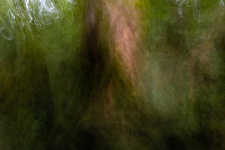 tree abstract 7752 EM.jpg