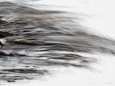 Kelp abstract 250511 EdMarshall.jpg