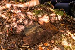 burrow checks 8802 EM.jpg