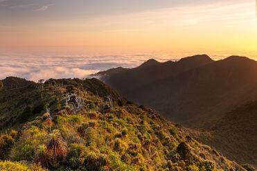 Pirongia Mountains 7582 EM.jpg