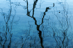 Reflection 1116 EM.jpg