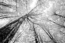 Winter canopy 0857 EM.jpg