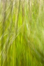 grass abstract 6962 EM.jpg