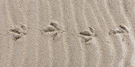 kiwi tracks 2780 EM.jpg