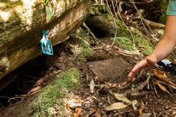 burrow checks 8864 EM.jpg