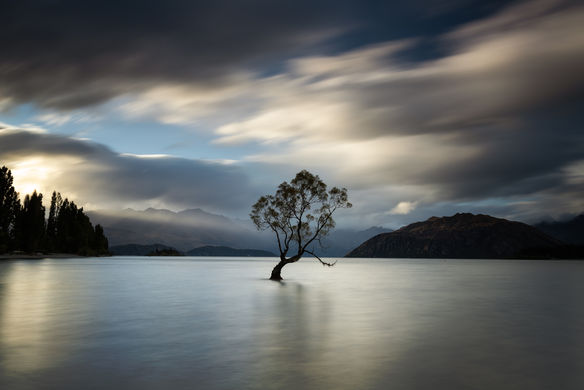That Wanaka Tree 3745 EM.jpg