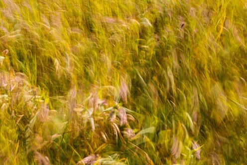 Reeds 8816 EM.jpg