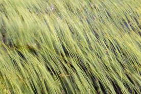 Horsetail 6545 EM.jpg