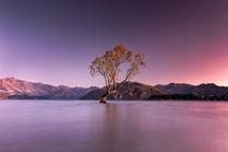 That Wanaka Tree 3766-2 EM.jpg