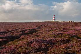Daymark heathland 7413 EM.jpg