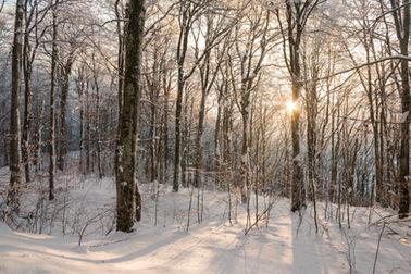 Winter woodland 1162 EM.jpg