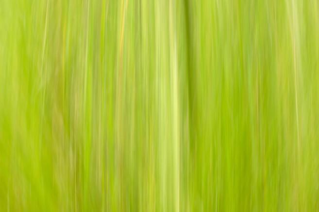 grass abstract 6969 EM.jpg