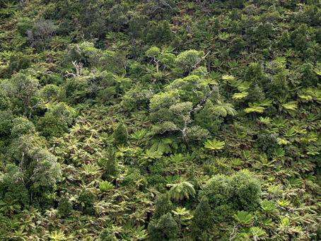 Chatham Island native bush 161575 EdMars