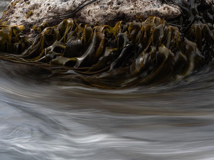 Kelp abstract 250484 EdMarshall.jpg