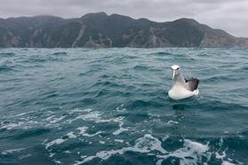 Salvins Albatross 2321 EM.jpg