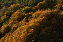 autumn leaves 0722 EM.jpg