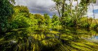 River_Anker_habitat_ed_marshall.jpg