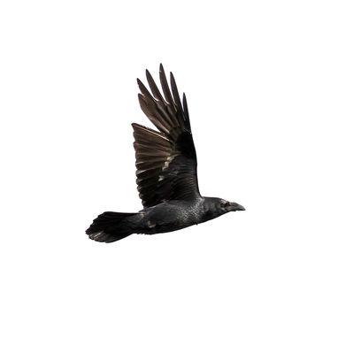 Raven 9702 EM.jpg