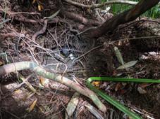 pig damage nest 101215 EM.jpg