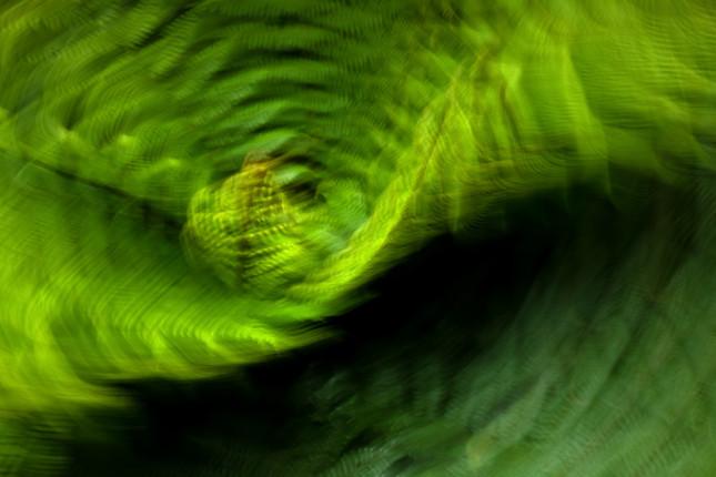 fern abstract 7860 EM.jpg
