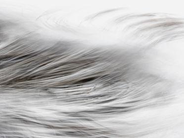 Kelp abstract 250447 EdMarshall.jpg