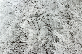 Hoar frost Thick_hoar_frost_on_trees EM.