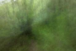 Omaha Forest 6247 EM.jpg