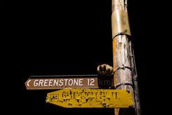 possum on street sign 4786 EM.jpg