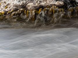 Kelp abstract 250439 EdMarshall.jpg