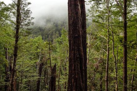 Red Beech Forest 3607 EM.jpg
