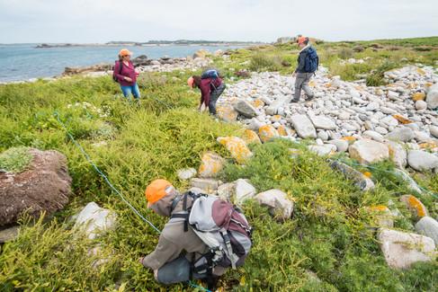 Isles_of_Scilly_SPA_Surveys-10.jpg